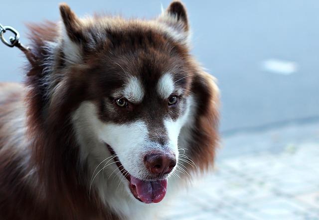 chien beau pelage