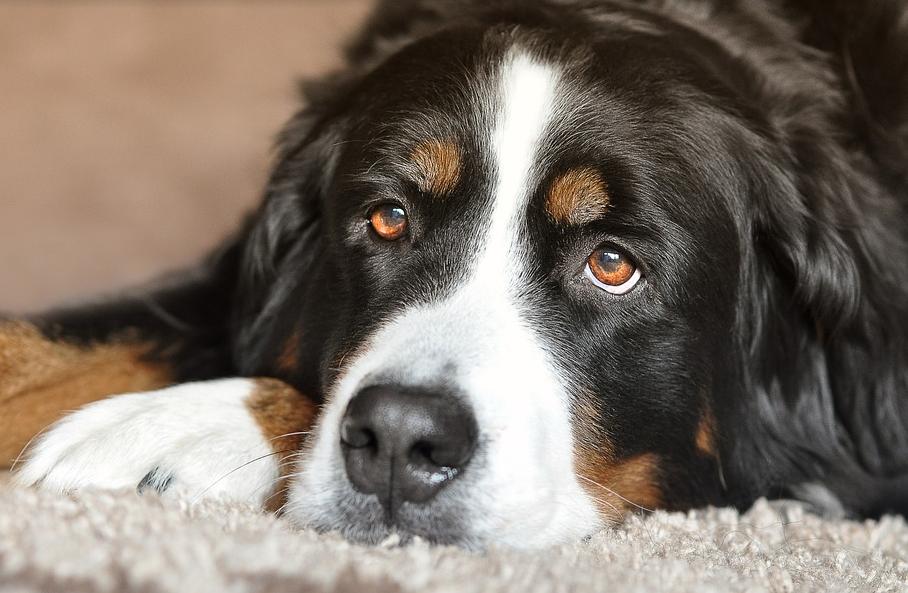 adopter chien refuge