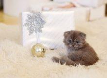 idees cadeaux chat