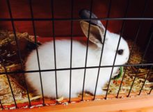 cage lapin