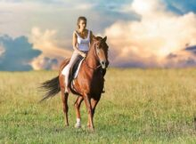 equipement haut de gamme chevaux