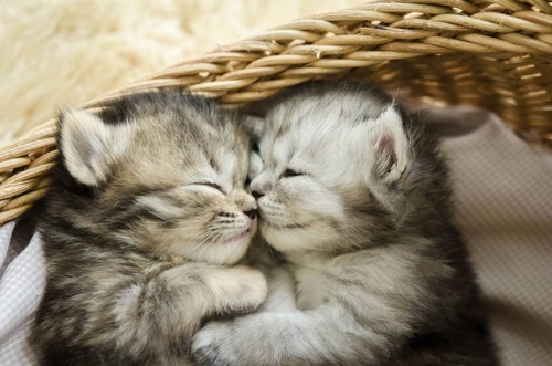 chatons qui dorment