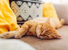 pourquoi les chats dorment-ils autant