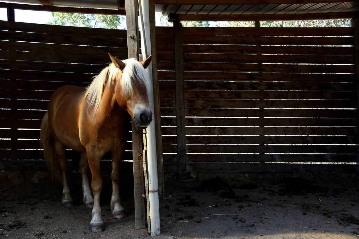 Cheval qui boîte, rendez-vous chez un vétérinaire équin