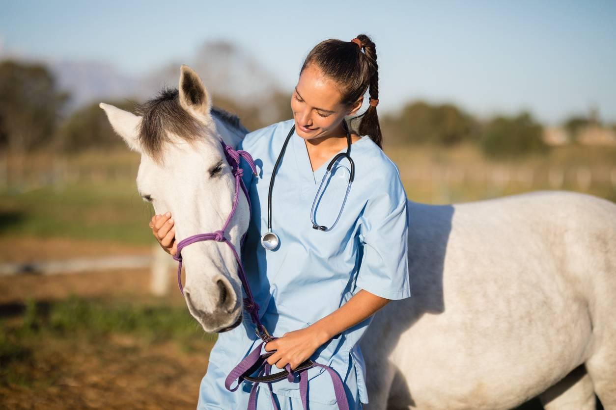 vétérinaire vermifuge cheval